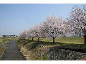 神の宮温泉 かわら亭:春の桜並木