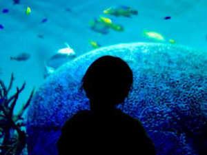 人気のスポット「能登島水族館」イルカショー