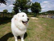 ペットと泊まれるコテージ エンゼルフォレスト那須白河の施設写真1