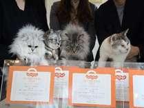 猫のいるお宿 プチホテル・フロマージュの施設写真1