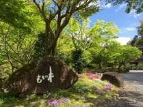 渓谷別庭 もちの木の写真