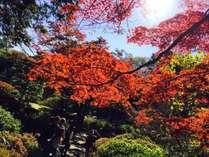 【紅葉を見に行こう!】☆アルコール飲み放題2食付バイキングプラン☆のイメージ画像