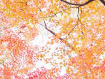 フォレストリゾート 猿ヶ京誓湖荘の施設写真1