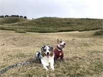 愛犬の宿 ラブリーワンズの施設写真1