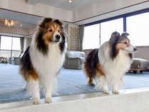 伊勢二見 愛犬と泊まれる旅館 まつしんの施設写真1