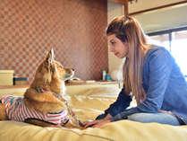 愛犬と楽しむ宿 じゃぱり館山の施設写真1