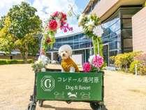 愛犬の為にデザインしたホテル コレドール湯河原 Dog&Resortの施設写真1