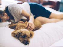 愛犬と泊まれるスタイリッシュ宿。D+KIRISHIMAの施設写真1