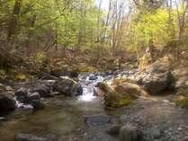 モモンガの森の施設写真1