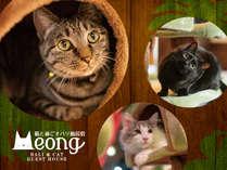 猫と過ごすバリ風民宿Meong楽宿白浜店の施設写真1