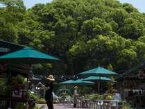 Slow Resort ぶどうの樹 『杜の七種』の写真
