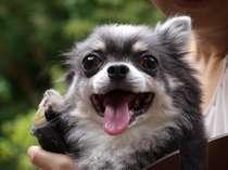 愛犬と泊まれるペンション ハッピーちっぴーの施設写真1