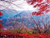 冬桜の宿 神泉の施設写真1