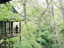 温泉山荘 だいこんの花の施設写真1