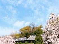 【春旅】ご家族・ご友人とのご旅行に☆季節割プラン【朝食付き】のイメージ画像
