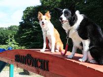 dog's pension しゃのんちの施設写真1