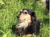 愛犬と泊まれる宿 道後温泉 別邸やすらぎの施設写真1