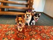 愛犬と泊まる宿 ななつぼしの施設写真1