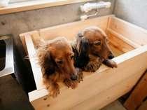 ペットと楽しむ温泉旅館 福久寿苑の施設写真1