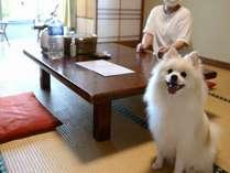 【ペットと泊まれる宿】 日奈久温泉 不知火ホテルの施設写真1
