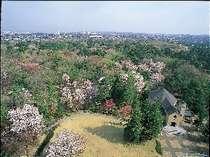 フォレスト・イン昭和館の写真