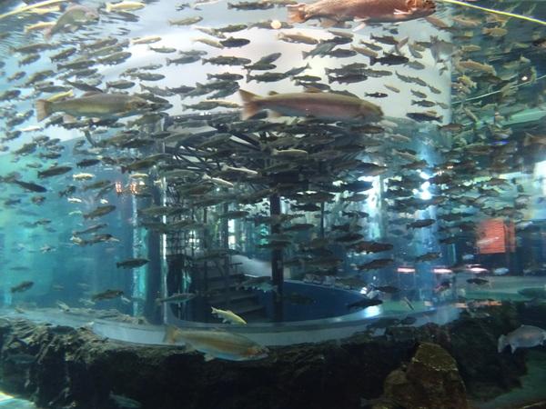 山梨県立 富士湧水の里 水族館(森の水族館)