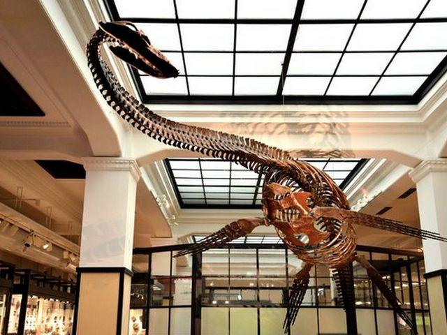 フタバスズキリュウの骨格_国立科学博物館