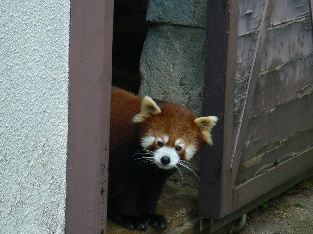 かわいい、だっこしたい。_愛媛県立とべ動物園