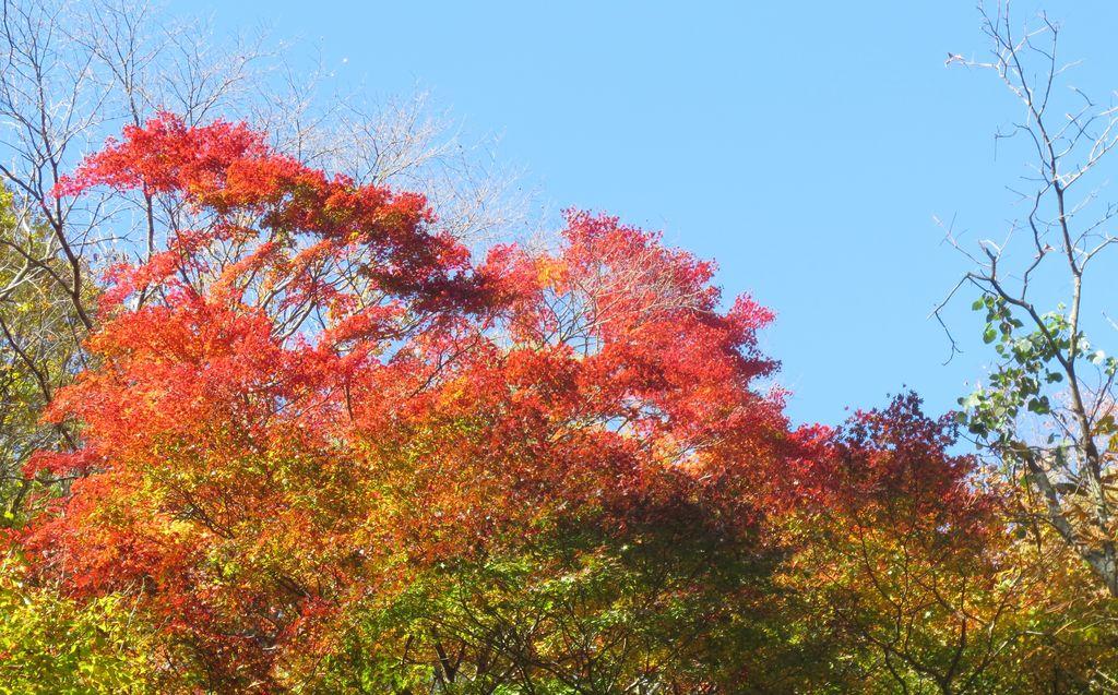 地獄谷の紅葉