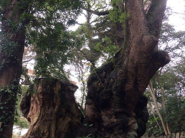 樹齢二千年以上とだけあって、壮大で素晴らしかったです。_来宮神社の大楠