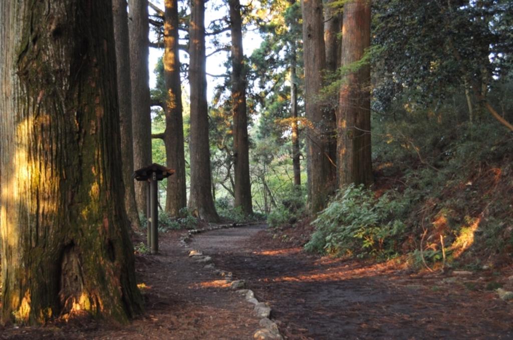 箱根旧街道杉並木