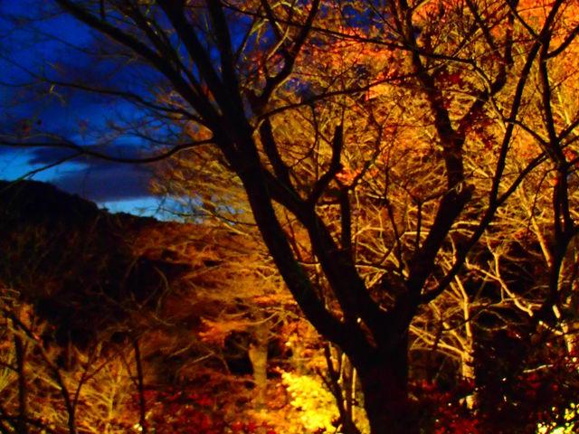 紅葉のライトアップ_養老渓谷