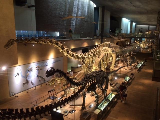 展示物も多く、みごたえあり!! 子供も興奮しながらみてました。_北九州市立いのちのたび博物館