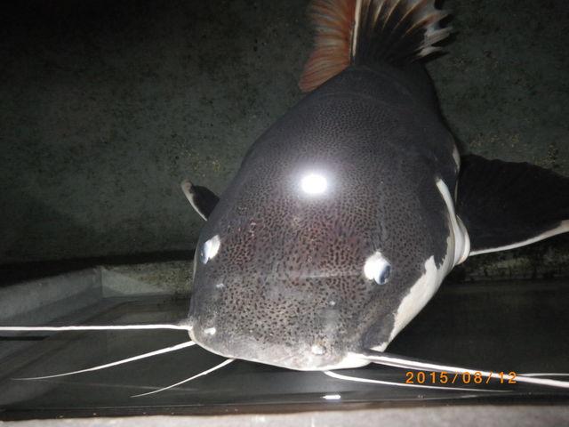 猫の顔に見える魚_わくわく海中水族館シードーナツ