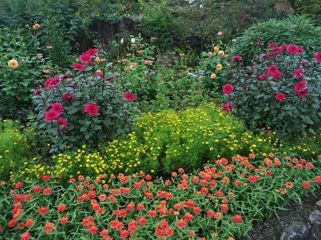 イングリッシュガーデンの花がきれいに咲いています_ラ・カスタ ナチュラル ヒーリング ガーデン