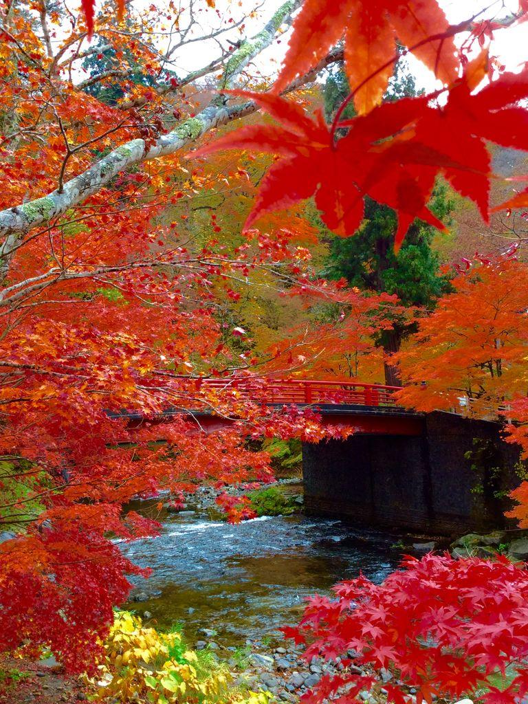 中野もみじ山の紅葉