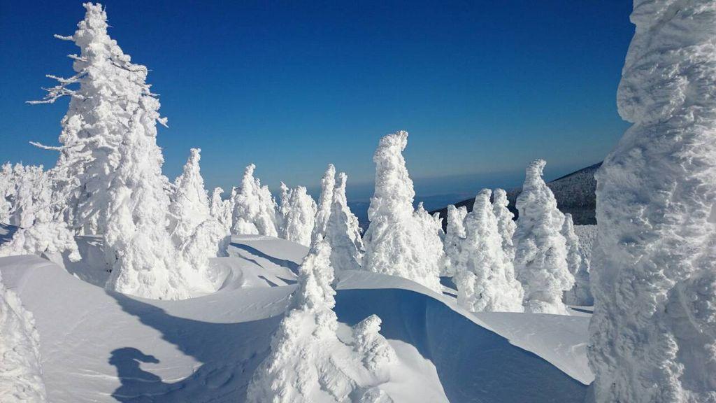 樹氷(蔵王町)