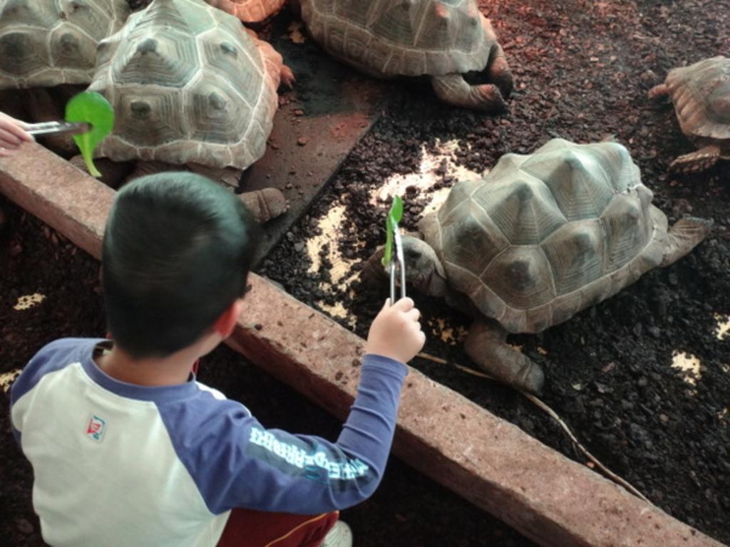 体感型動物園 『iZoo』