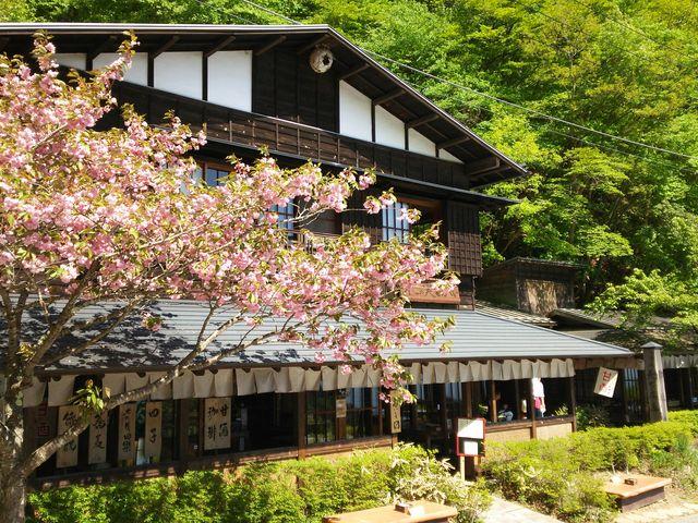桜も咲いていてきれいでした。_御坂峠天下茶屋