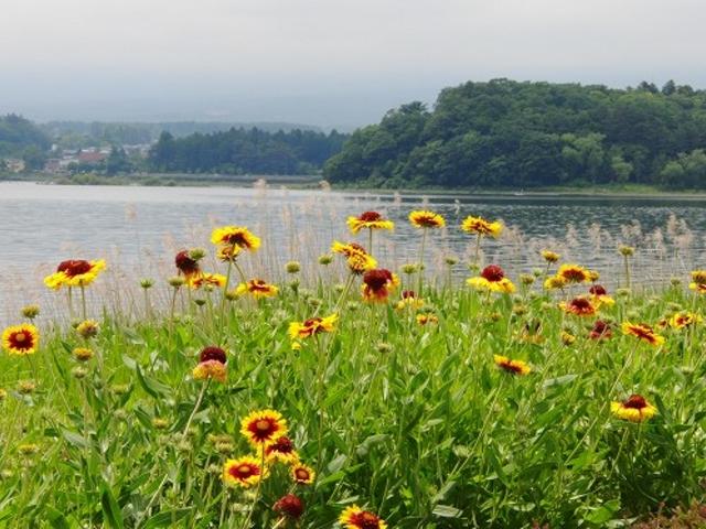 大石公園から河口湖を見る。_河口湖遊覧船アンソレイユ号