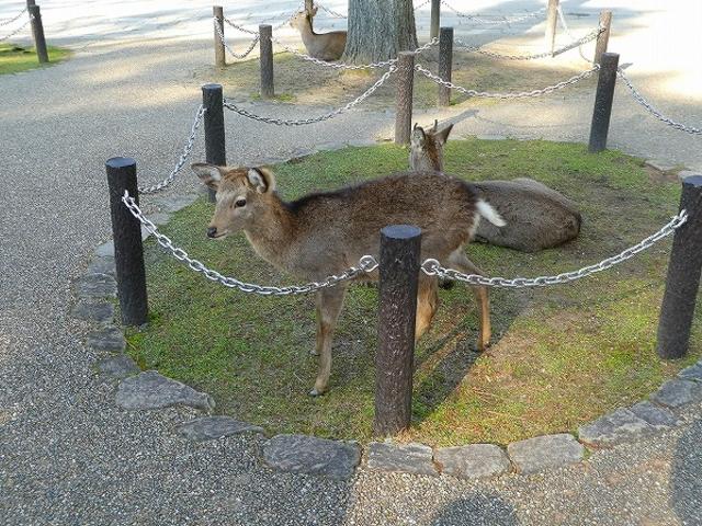 奈良県・奈良公園・浮見堂付近_浮見堂