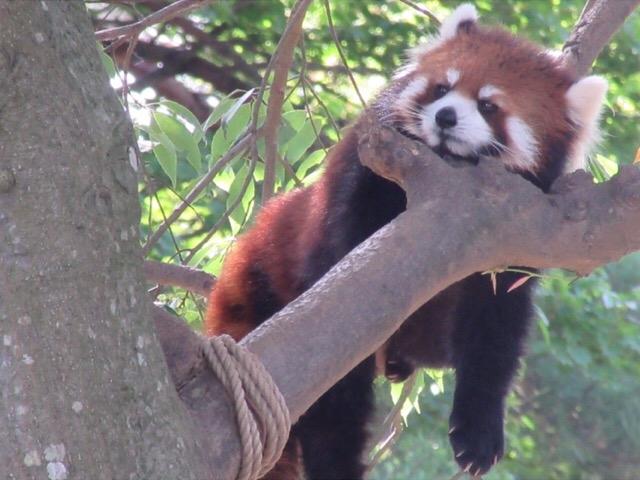 八木山動物公園フジサキの杜(仙台市八木山動物公園)