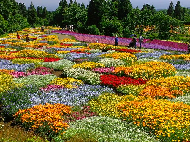 春彩の畑 花をパッチワークした様♪_くじゅう花公園
