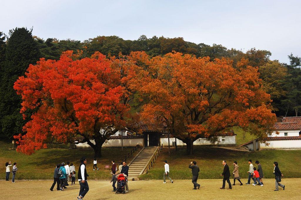 閑谷学校楷の木