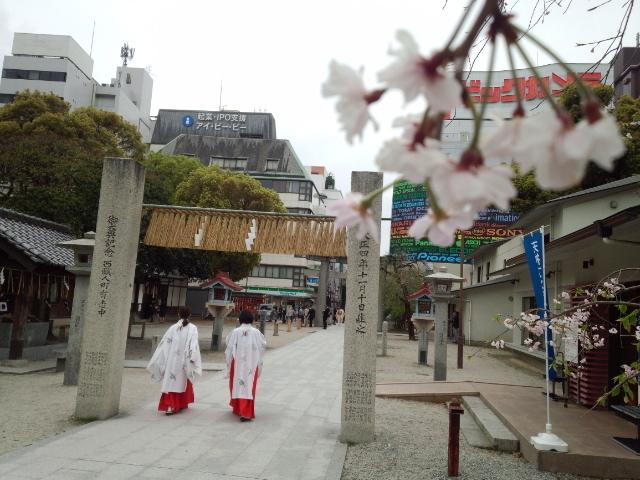 巫女と桜_警固神社