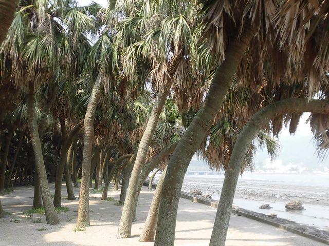③_青島の亜熱帯性植物群落
