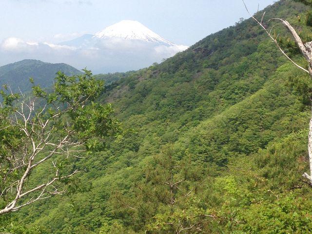 丹沢の道中からみる富士山_丹沢山