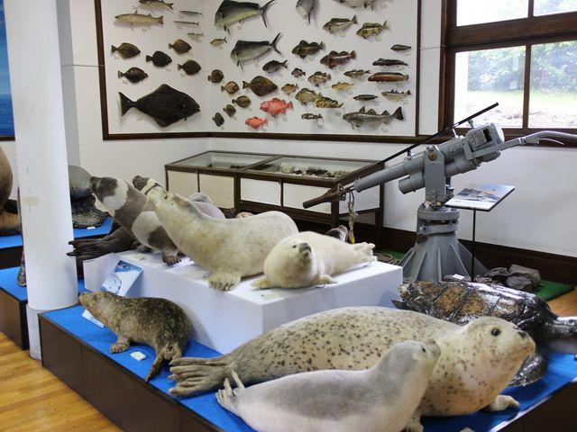 海洋生物_網走市立郷土博物館