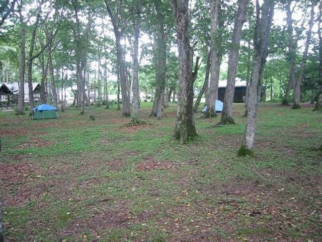 雰囲気はとても良いです。_緑ケ丘公園キャンプ場