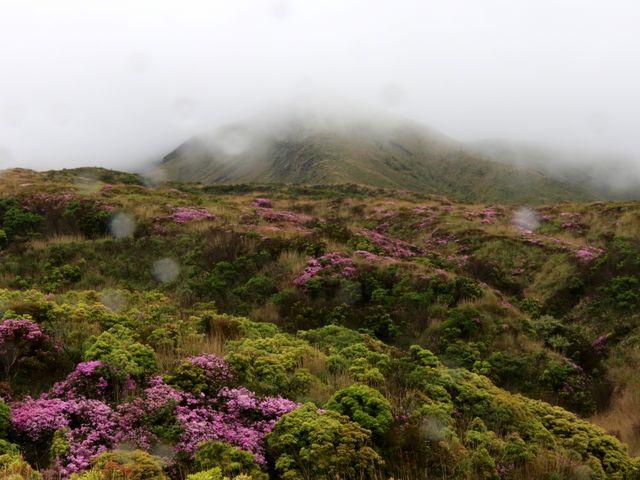 ガスッテ上は見えない_阿蘇山上のミヤマキリシマ